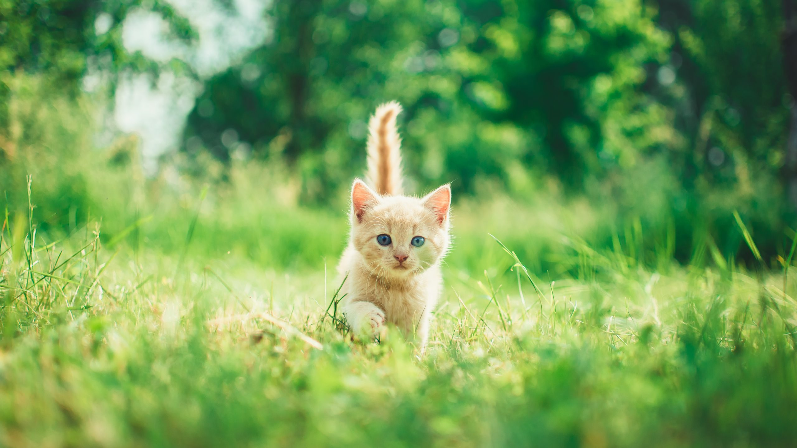 Study Finds Cats Can Benefit Kids with Autism